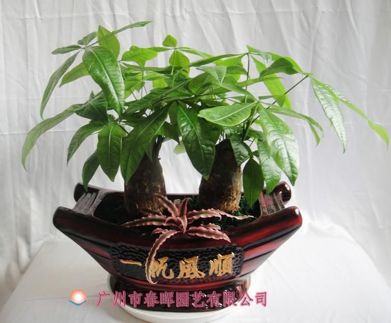 产品介绍:ch921艺术小盆栽 — 广州春晖园林有限公司